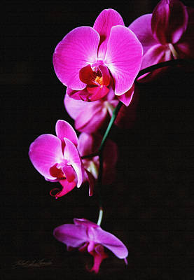 Poster featuring the photograph Pink Orchid Trio by Robert Kernodle