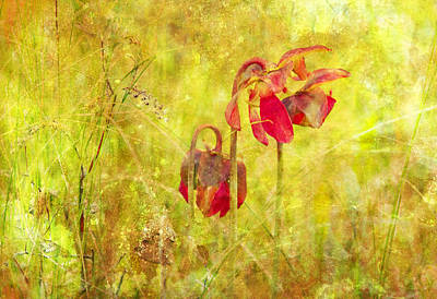 Poster featuring the photograph Pitcher Plant by Gordon Ripley
