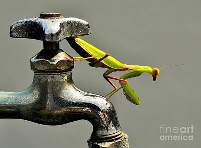 Praying Mantis Poster by Dean Harte