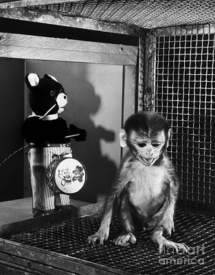 Primate Fear Testing Poster by Science Source