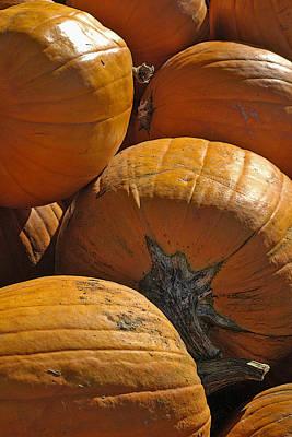 Pumpkin Harvest Poster