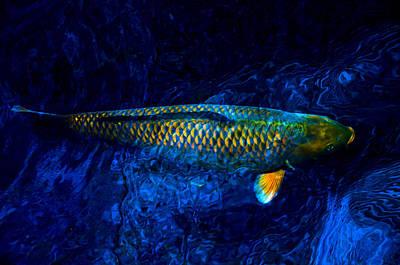 Rar Fish Poster