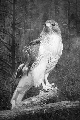 Red Tailed Hawk Perched On A Branch In The Woodlands Poster by Randall Nyhof