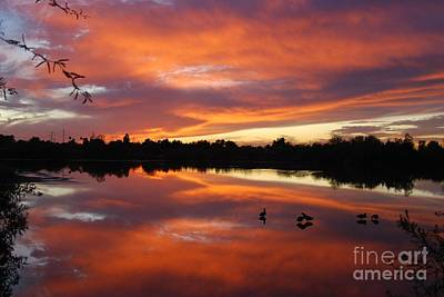 Poster featuring the photograph Riparian Sunset by Tam Ryan