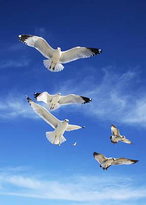 Seagulls Ascending Poster