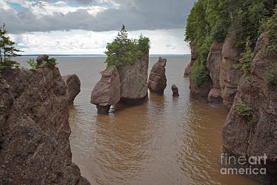 Seastacks At Hopewell Rocks Poster by Ted Kinsman