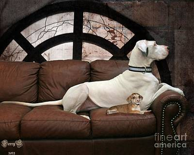 Shelter Dogs Poster