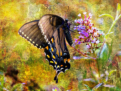 Spicebush Butterfly Looking Pretty Poster by J Larry Walker