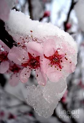 Poster featuring the photograph Spring Blossom Icicle by Kerri Mortenson