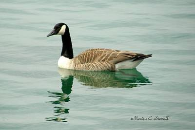 Spring Collection - Goose In Bay Harbor Poster