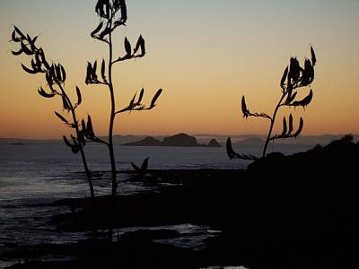 Sunrise On East Coast Of North Island 1 Poster by Peter Mooyman