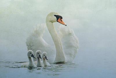 Swan Family Poster by Betty Wiley