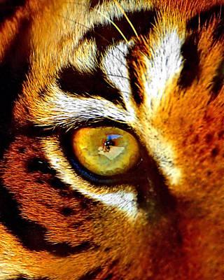 Tigers Eye Poster
