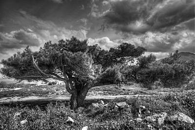 Tree In The Wind Poster by Stavros Argyropoulos