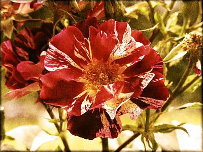Vintage Rose Poster by Bonnie Bruno