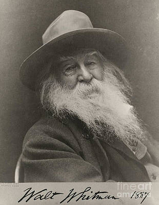 Walt Whitman Poster by Photo Researchers
