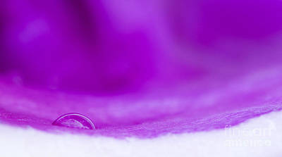 Water Drop In Purple Poster