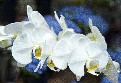 Poster featuring the photograph White Orchids by Gordon Ripley