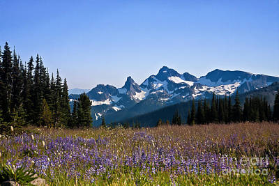 Wildflowers In The Cascades Poster by Ronald Lutz