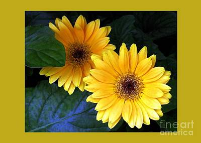 Yellow Dahlias Poster by Dale   Ford