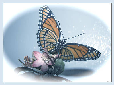 Butterfly Collection Design Poster by Debra     Vatalaro