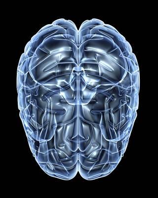 Human Brain, Artwork Poster