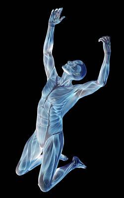 Male Musculature Poster by Friedrich Saurer