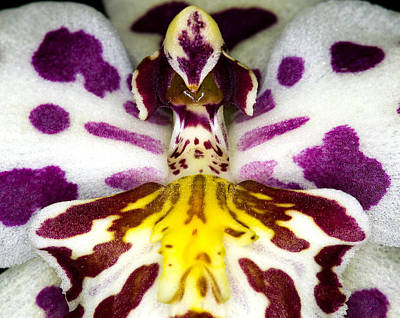 Exotic Orchid Flower Poster by C Ribet