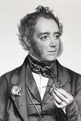 1849 John Obadiah Westwood Entomologist Poster by Paul D Stewart