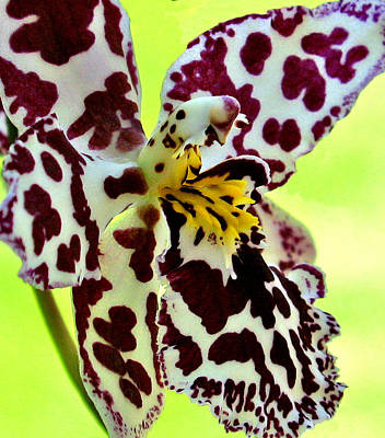 Orchid Flower Bloom Poster by C Ribet