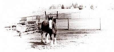 1900  Clydesdale Horse Poster