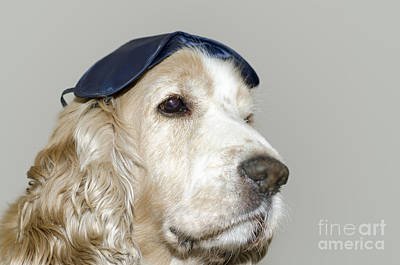 Dog With A Sleep Mask Poster by Mats Silvan