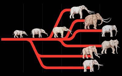 Elephant Evolution, Diagram Poster