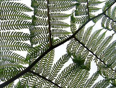 Ferns Poster by Sylvie Leandre