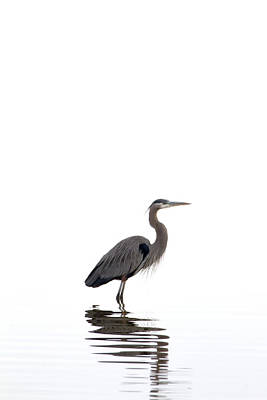 Poster featuring the photograph Great Blue Heron by Jason Smith