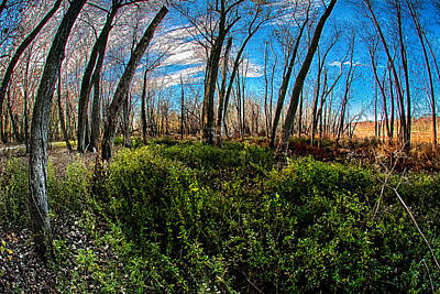 Illinois River Bottoms Poster by Kimberleigh Ladd
