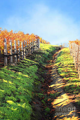 Late Autumn In Napa Valley Poster by Ellen Cotton