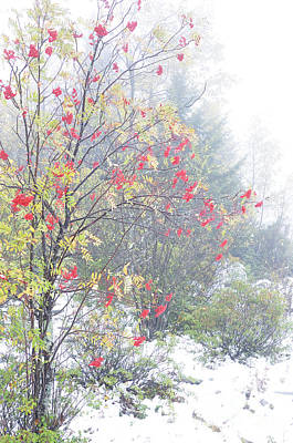 Mountain Ash And Snow  Poster