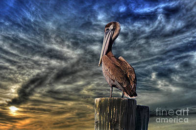 Poster featuring the photograph Pelican At Sunset by Dan Friend
