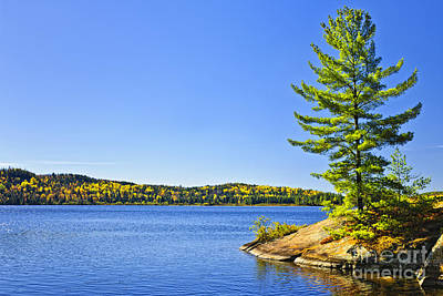 Pine Tree At Lake Shore Poster by Elena Elisseeva
