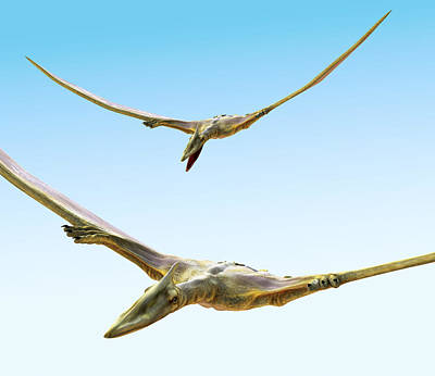 Pterosaurs Flying, Computer Artwork Poster