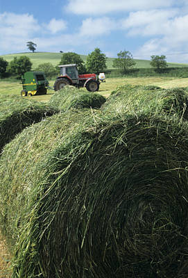 Silage Bales Poster by David Aubrey