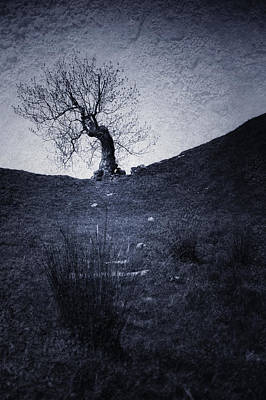 Tree Poster by Svetlana Sewell