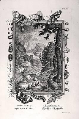 1731 Johann Scheuchzer Creation 5th Day Poster by Paul D Stewart