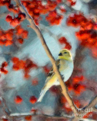 American Goldfinch Poster by Betty LaRue