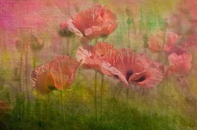 Poppies Poster by Carolyn Dalessandro