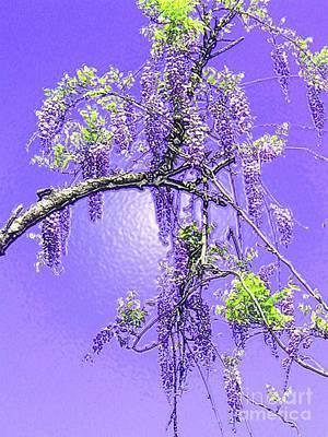 Purple Passion Wisteria Poster