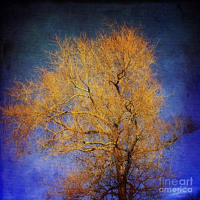 Textured Tree Poster by Bernard Jaubert