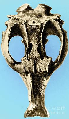 Toxodon, Extinct Mammal Poster
