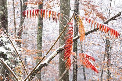 Autumn Snow Monongahela National Forest Poster